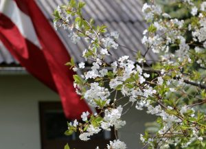 Baltā galdauta svētki 4.maijā
